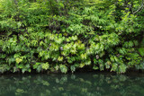 Tranquility in lush green Jungle foliage