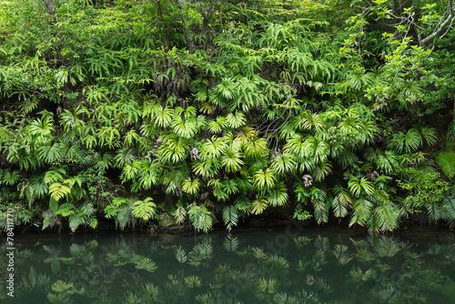 Foto op Plexiglas Japan Tranquility in lush green Jungle foliage