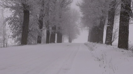 Winter rural snowy road with alley old trees and  magic fog