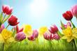 Spring flowers in grass