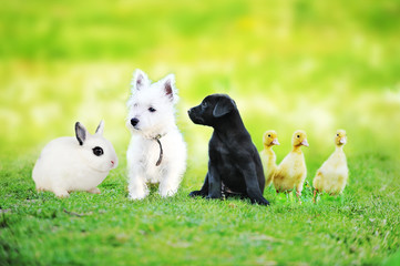 little black dog plays on green lawn