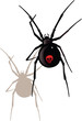 black widow spider - 78416557