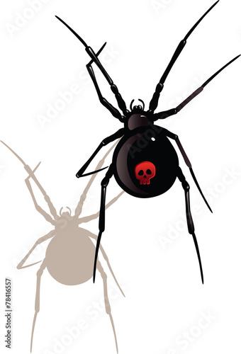black widow spider - 78416557