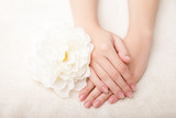 Beautiful woman hands and  flower over white background