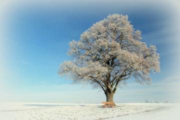 Eichbaum im Winterkleid