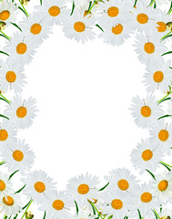 round frame of flowers daisies