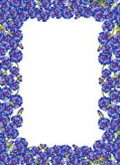 frame of flowers cornflowers