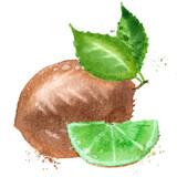 Kiwi vector logo design template. fruit or food icon.
