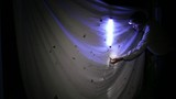 Moth trap, a white sheet with a UV blacklight poster