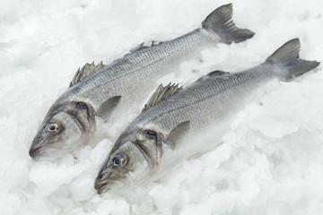 Seabasses on ice