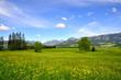 Frühlingswiese, Berge