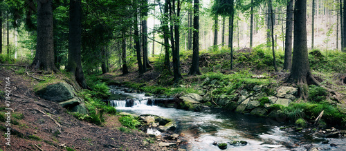 forest stream - 78427164