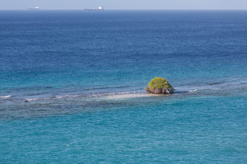 Tree Growing in Ocean