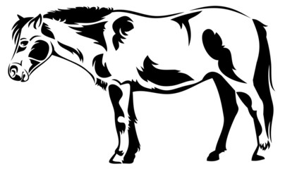 Vector outline image of a horse isolated on a white background