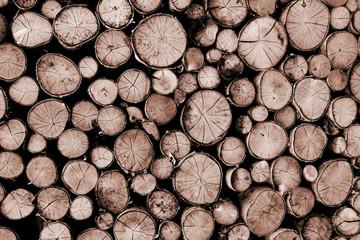 Querschnitt Holzhintergrund...