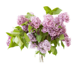 Huge bunch of different kind lilac