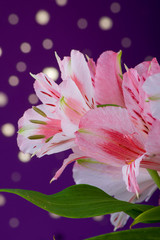 Bouquet of flowers alstroemeria