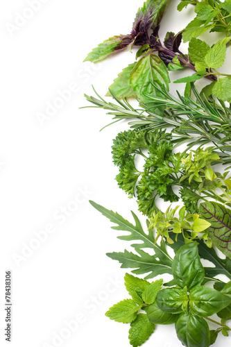 Canvas Kruiderij Fresh herbs