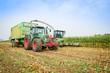 Maisernte,Maishäcksler in Aktion,Erntewagen mit Traktor - 78438590
