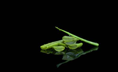 Fresh cut aloe vera leaf isolated