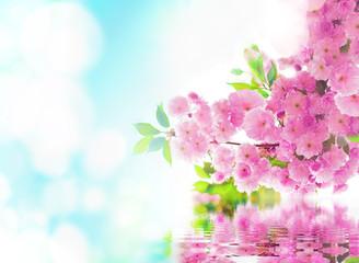 Spring. Sakura. Cherry blossom in the spring garden.