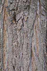 Acacia tree bark