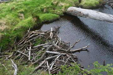 the beaver dam