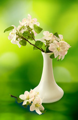 blossoming branches in a vase on a green background