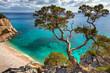 Leinwanddruck Bild - alter Baum - Sardinien