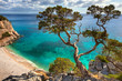 Leinwandbild Motiv alter Baum - Sardinien