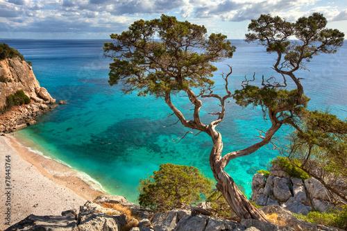 Tuinposter Bomen alter Baum - Sardinien