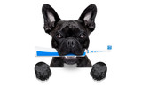 electric toothbrush dog