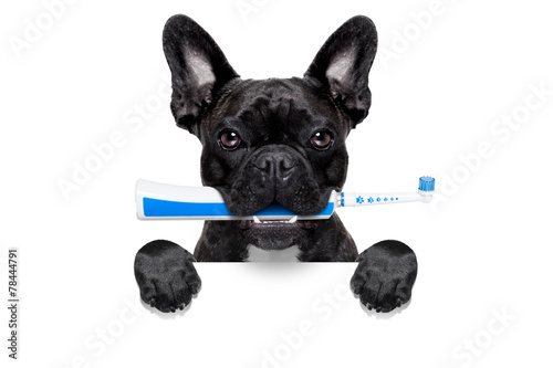 Keuken foto achterwand Wolf electric toothbrush dog