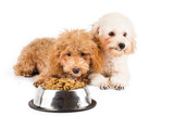 Two poodle puppies next to a bowl of kibbles poster