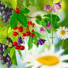 flowers and berries in the garden