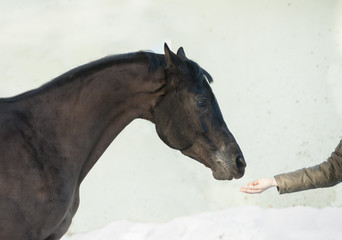 horse head with human's hand