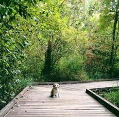 Dog sitting on boardwalk