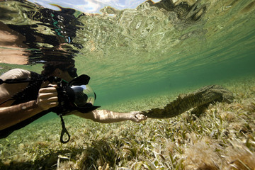 Mexico, Photographer holding crocodile's tail underwater