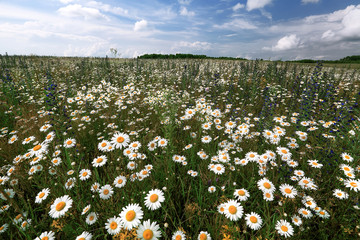 Lithuania, Summer Field