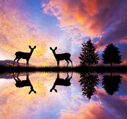 pareja de ciervos en el lago