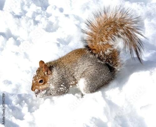 Tuinposter Eekhoorn Squirrel