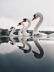 Denmark, Copenhagen, Swan boats reflecting in water