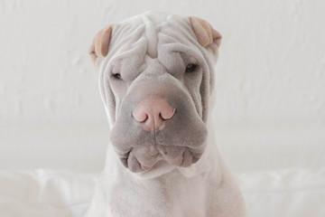 Portrait of worried dog