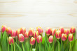 canvas print picture - Tulip Background