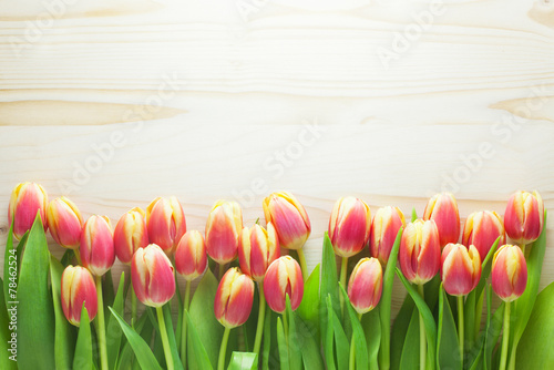 canvas print picture Tulip Background