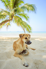 Dog under the palm.