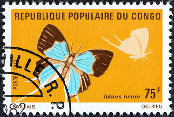 Long-tailed Sapphire, Iolaus timon butterfly (Congo 1971)