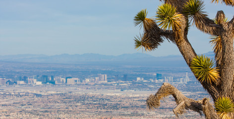 Joshua Tree and the Las Vegas Strip