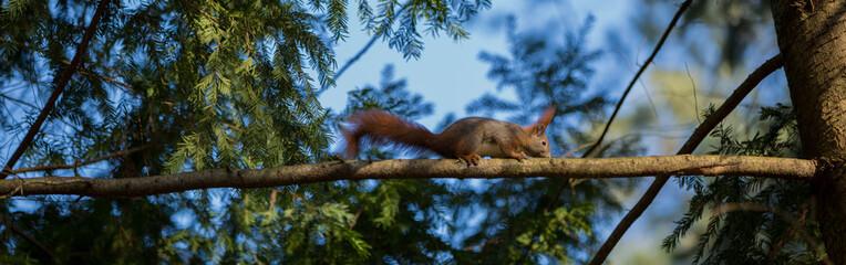 Eichhörnchen macht Sport am Baum
