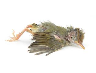The dead birds